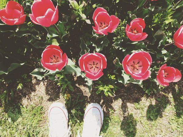 (*Ü*)ノohayoϋ♡タンポポ踏むとこやったΣ(・д・ノ)ノ Flowers Tulips Converse 淡路島 Awajishima Spring 春 チューリップ