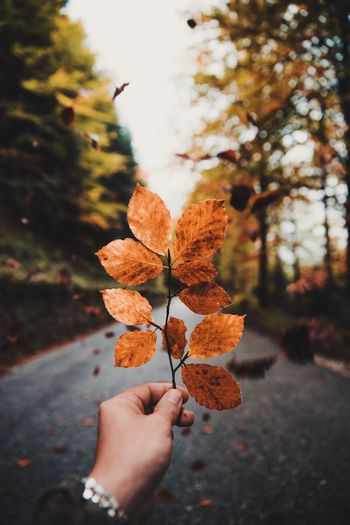 🍁🍁🍁 Autumn colors Autumn Leaves Autumn Autumn🍁🍁🍁 Autumn Collection Human Hand Hand Personal Perspective Holding Nature Day EyeEmNewHere A New Beginning