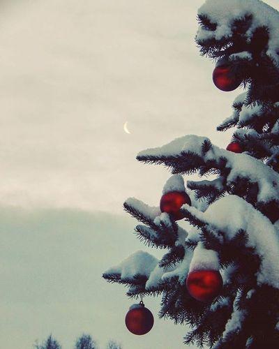 🌲🌲🌲 Egle Spruce Mēness Moon Eglīšurotājumi Rotajumi Dekoracijas Decorations Sniegs Snow Ziema Winter Latvija Latvia @travelnews_lv Manaziema It's Cold Outside Showcase:January White Album