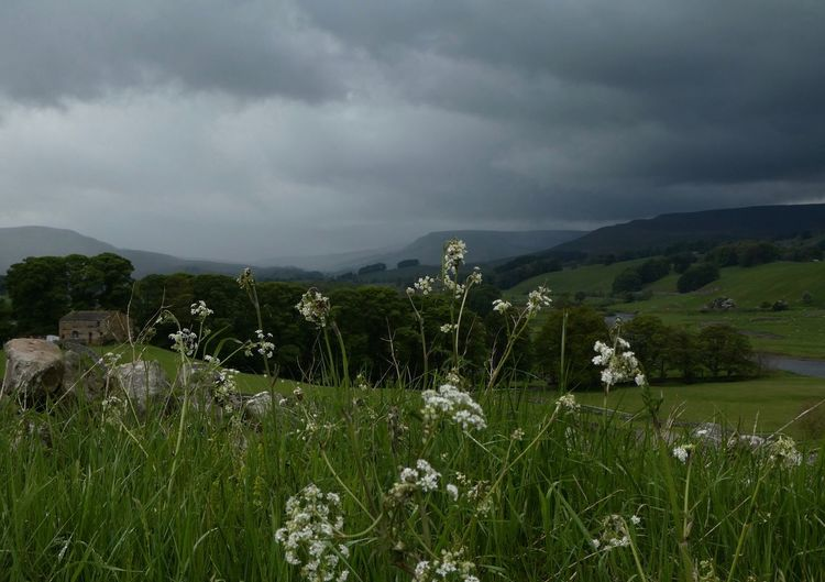 Rainstorm over Hawes Wensleydale Wensleydale Eyem Best Shots Nature_collection Copy Space Eyemphotography EyeEm Nature Lover Cow Parsley Cloud - Sky Plant Sky Beauty In Nature Scenics - Nature Storm Nature Storm Cloud No People Overcast Environment Landscape Flower