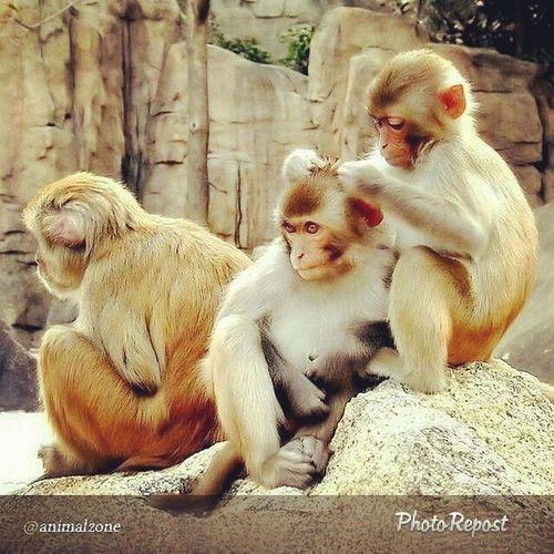 Tatampo ako kxe kinukutuhan ni evie c @jeaeiou .. bwahahahaha.. Monkeybuddies Travelbuddies FoodBuddies 🐒🐵🐒🐵
