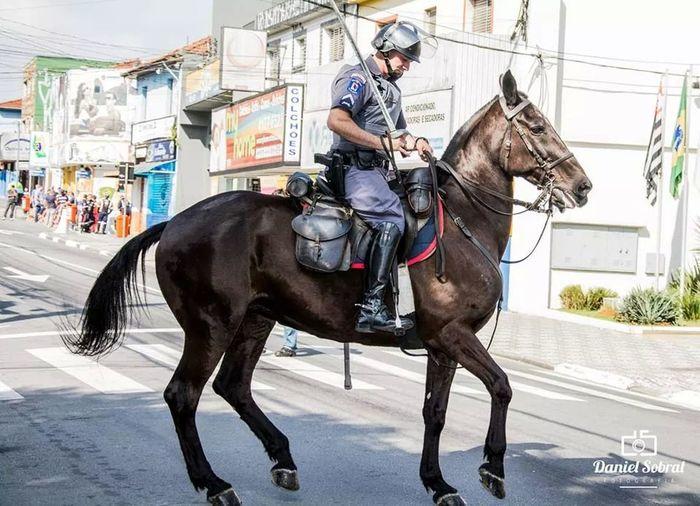 Cavalry Soldier Cavalaria Horse Cop