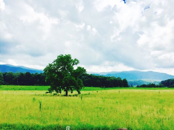 Tree Nature Landscape Sky Cloud - Sky Tranquility Green Color Beauty In Nature Tranquil Scene Scenics Field Grass Outdoors No People Mountain Cades Cove