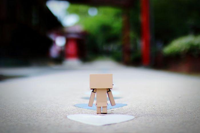 撮り直しまくり。 Danbo Love ♥ EyeEm Gallery Focus On Background Japanese Shrine Cheese! Check This Out EyeEm Best Shots Walk This Way
