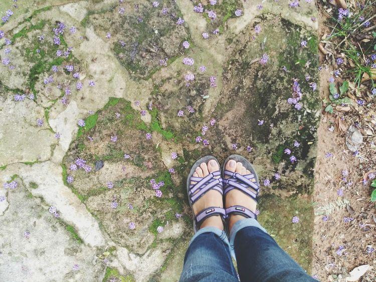 un camino de florecitas