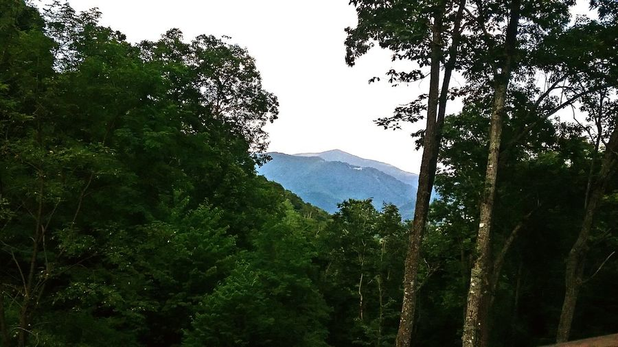 Blue Ridge Mountains Summer Mountain Summer Forest Blue Ridge Mountains Cabin In The Woods Vacation Vacation Rental Mountain Valley Tree Mountain Forest Tea Crop Tree Area Rural Scene Sky Mountain Range Green Color Landscape Pine Woodland Lush - Description Branch Woods Evergreen Tree Tree Trunk Lush Foliage Pine Tree