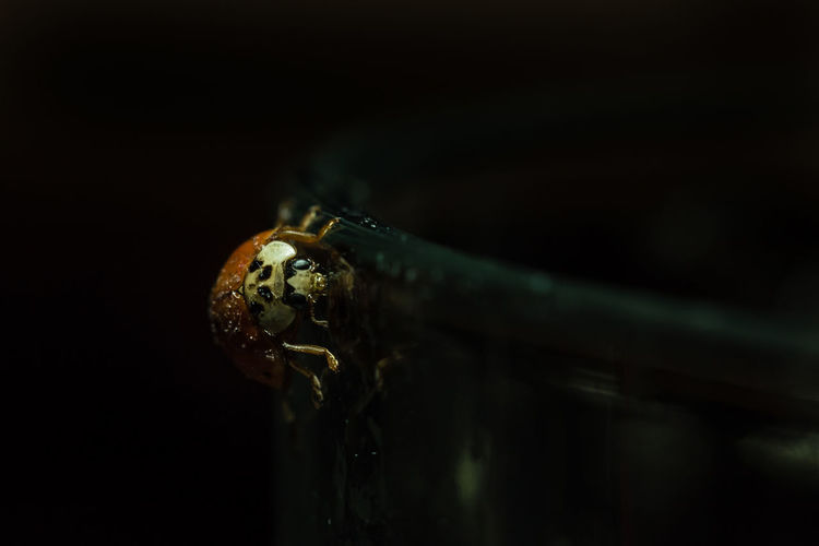 Ladybug at a