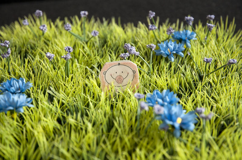 Blue flowers blooming in grass