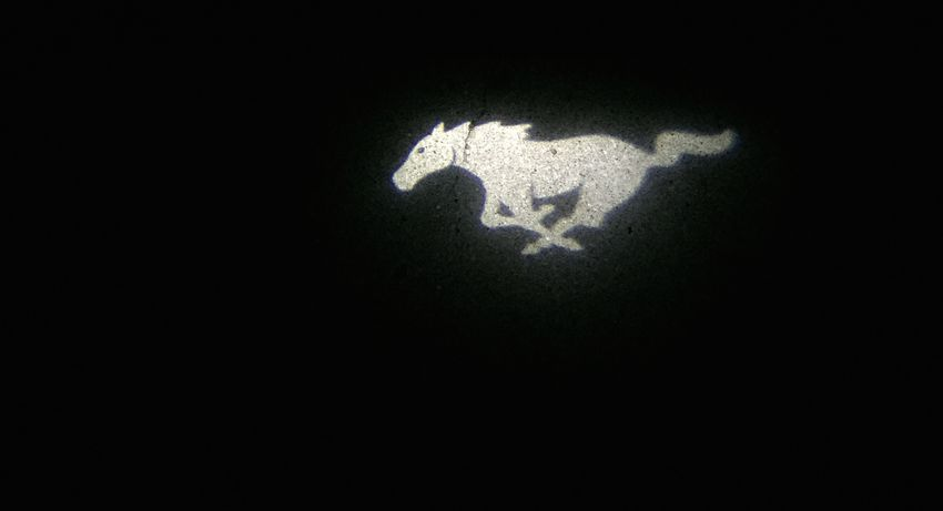 Mustang illumination from a Mustang GT Horse Horse Life Horse Riding Illuminated Light And Shadow Mustang Mustang GT Night