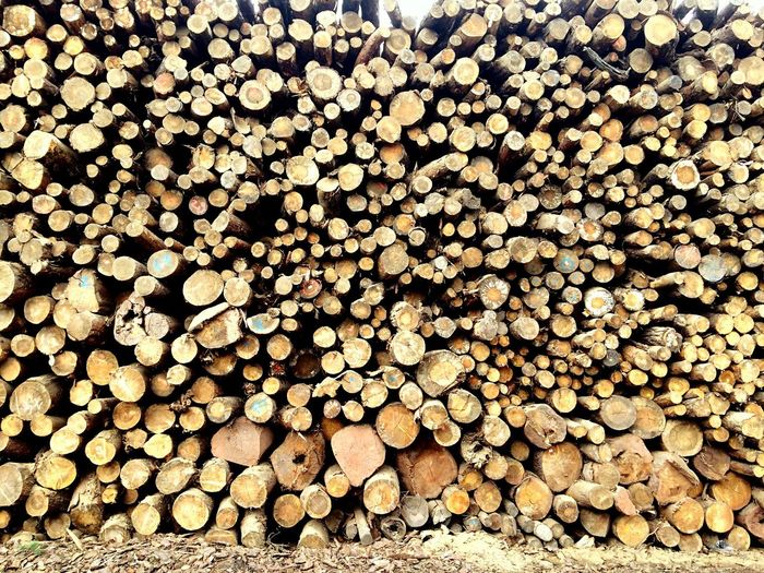 Stack Firewood Log Timber Woodpile Large Group Of Objects Abundance Lumber Industry Heap Deforestation Forestry Industry Wood - Material Pile Full Frame Backgrounds Fuel And Power Generation Textured  No People Day Outdoors