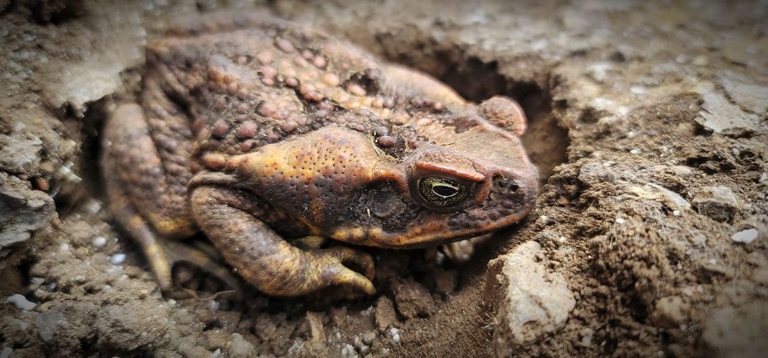 Close-up of toad/frog on land