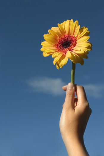 Close-up of hand holding yellow flower against sky