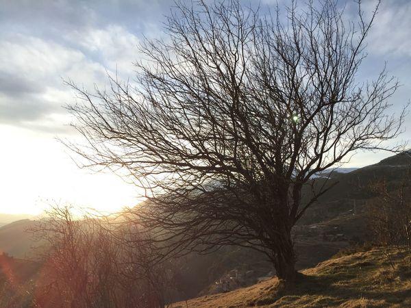 Relaxing No People Tree Castellar De N'hug nofilter Spring afternoon Mountains Pyrenees