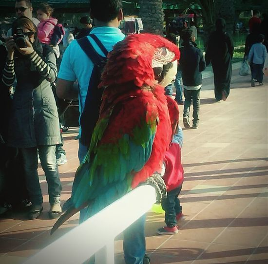 hai! see ,am so beautiful !! There Is A Parrot ! Bird Photography EyeEm Gallery Animals Birds Alareen Bahrain