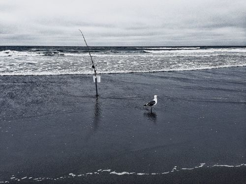 Monochrome Seagull In The Ocean Cast Fishing