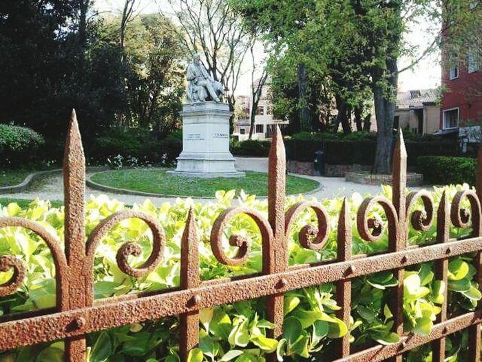 Papadopoli garden Tree Green Color Nature Day No People