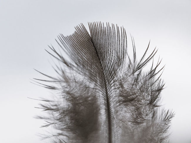 🐦 feathers Nature_collection Naturelovers Nature_landscape Nature Photography Macro Zoom In Zoom Bird Pigeon Feather  Bird Feather Bird Feathers Close-up Sky Blooming Spread Wings Bird Of Prey