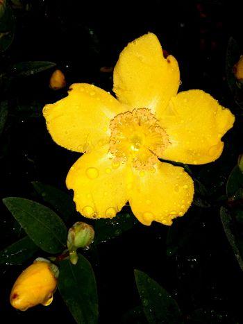 Water Flower Flower Head Yellow UnderSea Underwater Leaf Close-up Plant