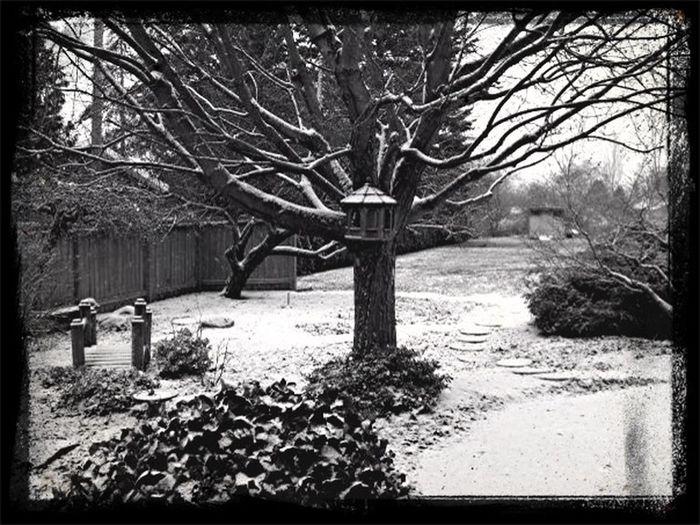 Winter Backyard
