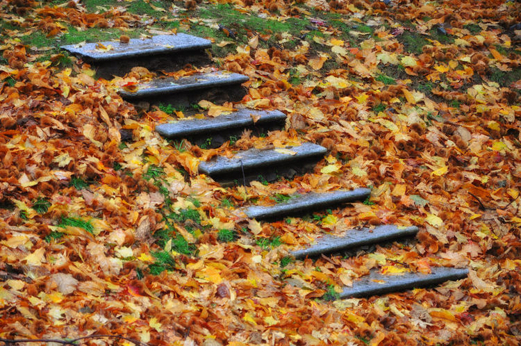 Stone stairs in nature with autumn leaves Abbundance, Autumn Beauty In Nature Close Up Colorful Fall Grass Hand Made Leaf Nature No People Outdoors Side View Stair Staircase Stairways Stone - Object Stone Material Tranquility