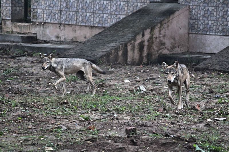Wild wild run Mammal Animal Animal Themes Vertebrate No People Day Domestic Animals Fawn Built Structure Field Animals In The Wild Land Nature Two Animals Pets Full Length Standing Plant Group Of Animals Animal Wildlife