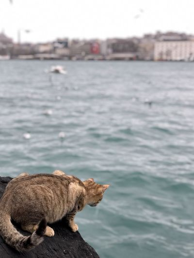 View of a cat on sea