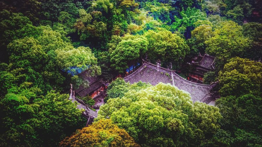 Hidden in The Forest Check This Out Taking Photos Aerial View Chinese Architecture Hidden Treasure Forest Green Nature Nature Photography View View From Above EyeEm Nature Lover EyeEm Guangzhou China Baiyun Mountain