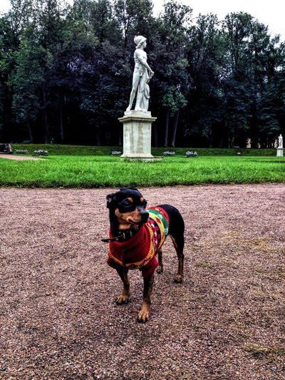 Statue of dog on field