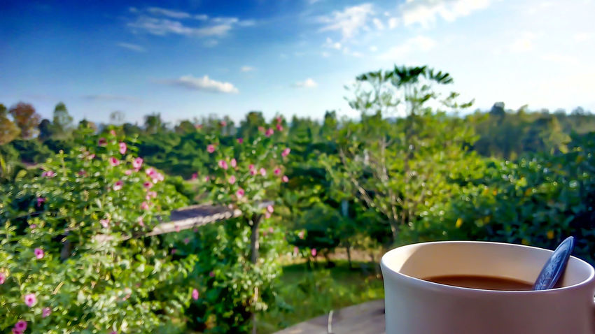 Coffee Nature Morning
