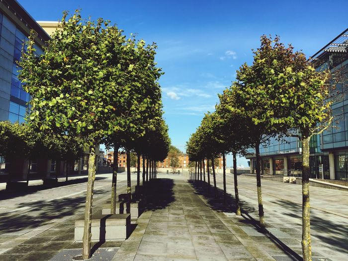 Tree Shadow Treelined Diminishing Perspective Hull Hull City Of Culture 2017 Cityofculture  Urban Landscape