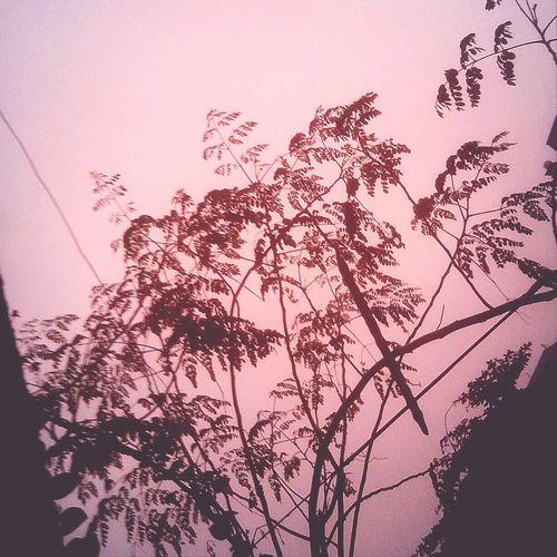Hoàng hôn Sài Gòn hôm nay thật ảo..hồng hồng tuyết tuyết Saigon Sunset