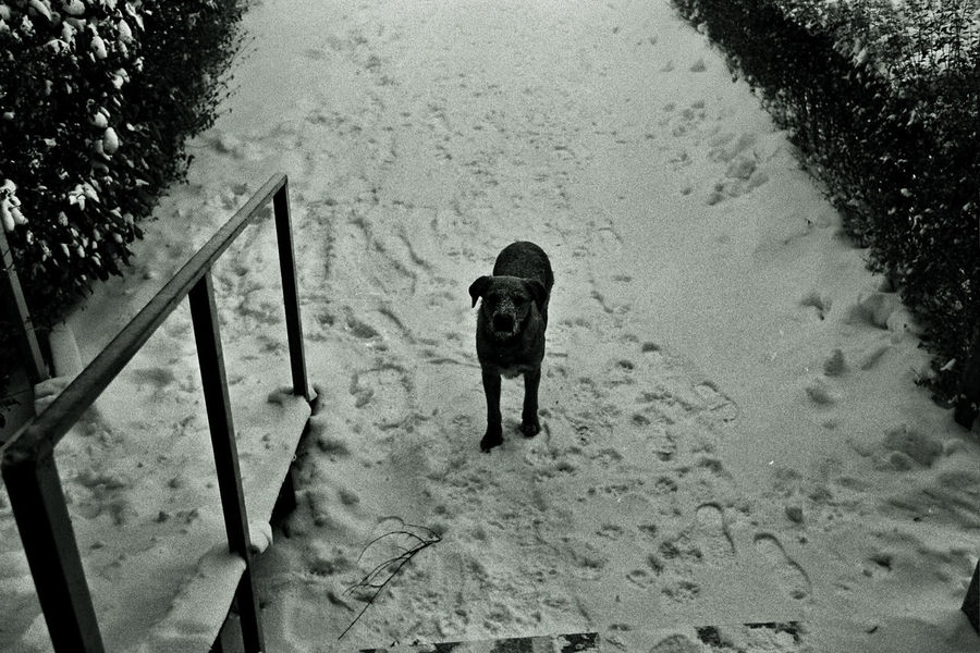 Outdoors No People Black And White Photography Black & White Beauty In Nature Tranquil Scene Tranquility Filmisnotdead Film Photography Blackandwhite Analogue Photography Analog Photography Dog Doglife