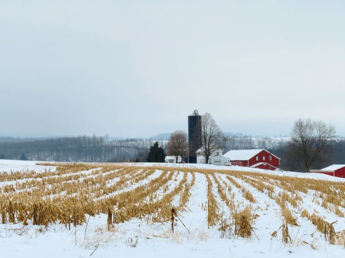 Snow covered field with red barn and silos against sky