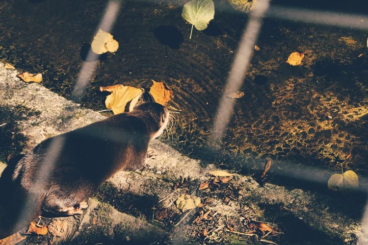 Autumn Day Domestic Animals Fragility Long Low Section Outdoors Overhead View Personal Perspective Road Shadow Standing Street Sunlight Transportation