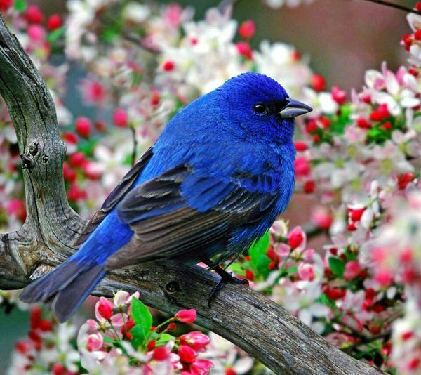 Blue Bird Flowers
