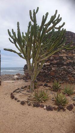 Tree Sea Beach Sand Sky Plant Shore Cactus Arid Landscape