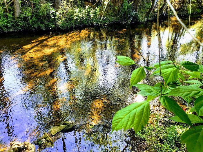 小溪 creek Landscapes Creek Plant Growth Leaf Nature Green Color Plant Part No People Day Water Beauty In Nature Outdoors Sunlight High Angle View Lake Close-up Land Tranquility Reflection Tree Leaves