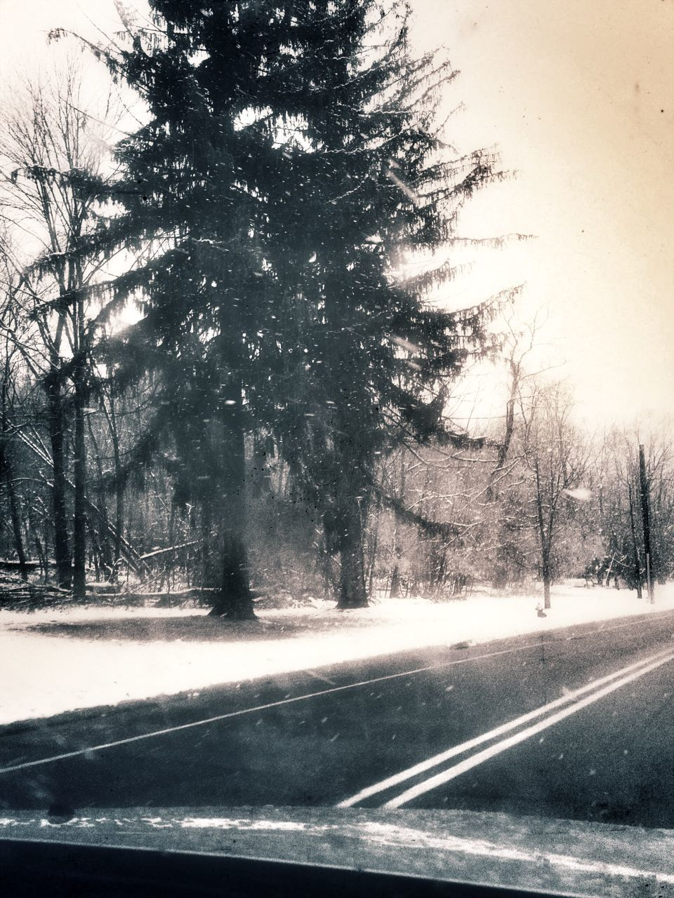 tree, road, transportation, winter, nature, snow, car, cold temperature, the way forward, tranquil scene, tranquility, day, bare tree, landscape, no people, scenics, beauty in nature, outdoors, branch, clear sky, sky