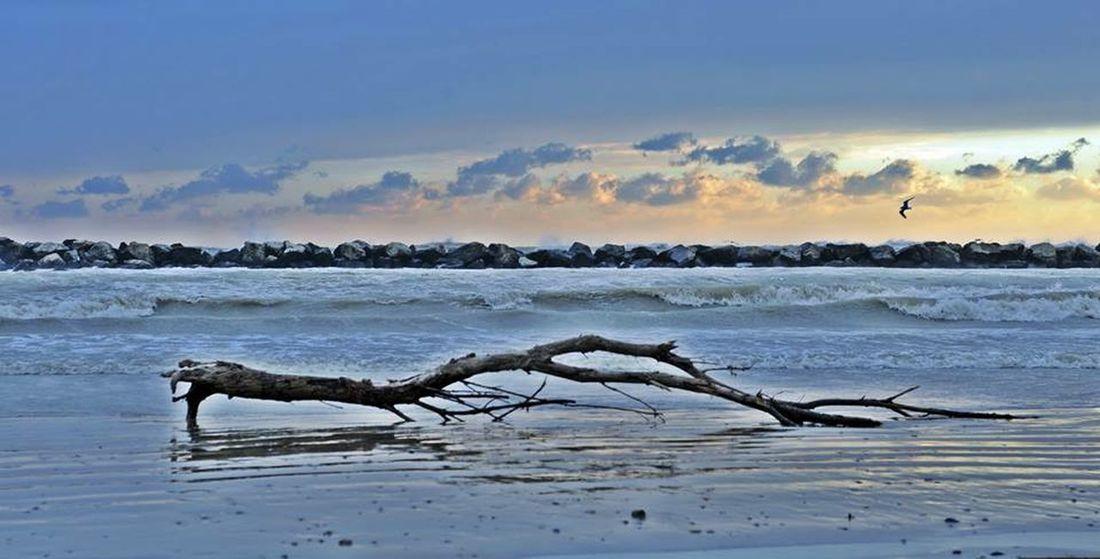 Beach Sea Winter Sea Water Bellariaigemarina