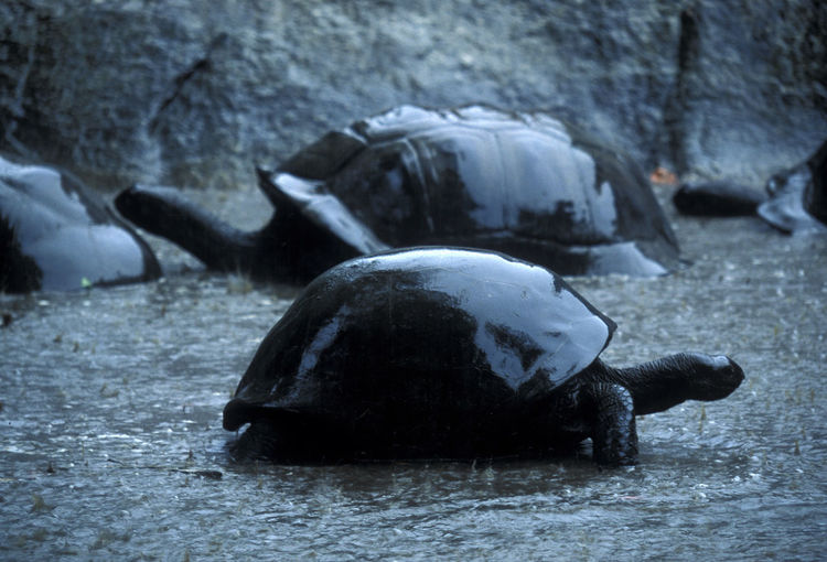 Close-up of tortoises during rain