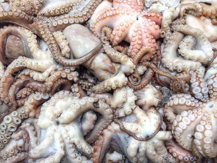 Full Frame Shot Of Octopus At Market For Sale