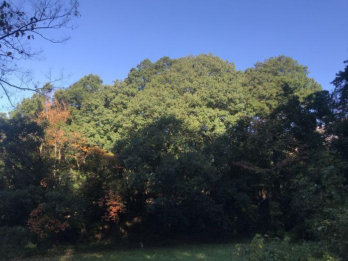 山崎公園 Tree Plant