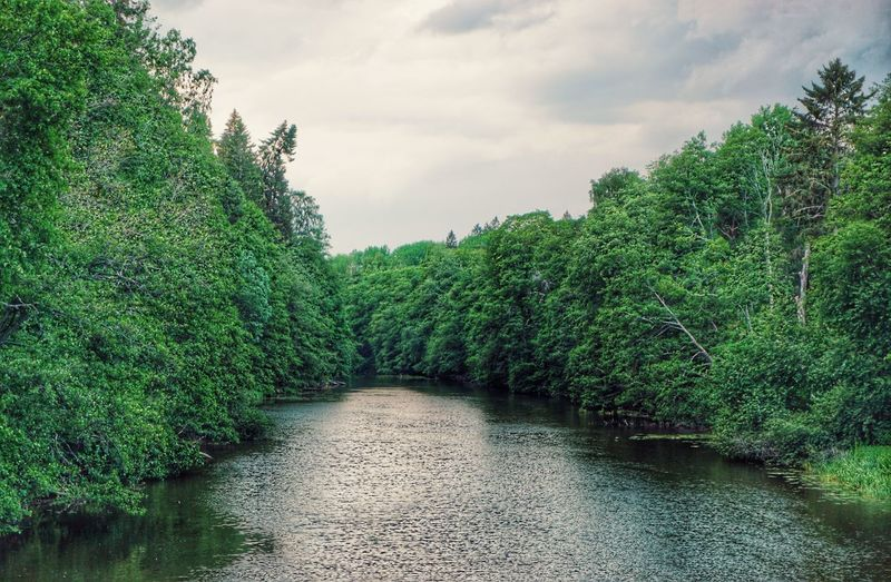 Water River Forest 2019 Niklas Storm Juni Tree Sky Cloud - Sky Green Color Plant Woods Flowing Water Lakeside Calm Waterfront Stream The Great Outdoors - 2019 EyeEm Awards My Best Photo