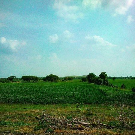 Taken while driving to Tarana, small village near ujjain. Ujjain Fields Green Farmland Greenery Saveearth Peace India Madhyapradesh Instagram Picoftheday Randomtags SaveNature Farm