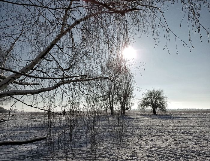 """""""Winter"""" AntiM Bare Tree Branch Change Cold Cold Temperature Covering Forest Frozen Light Nature Outdoors Season  Snow Tranquil Scene Tranquility Tree Tree Trunk Weather Winter"""