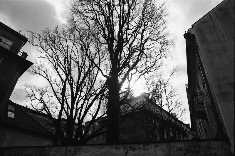 Rollei 400 RPX; Analog in Warsaw The Week on EyeEm Film Photography Analogue Photography Black And White Bnw Monochrome Light And Shadow Capture The Moment Nikonphotography Architecture Building Exterior Built Structure Tree Bare Tree Building Sky Low Angle View No People Cloud - Sky Plant Branch Nature Outdoors Day Residential District Silhouette House Tree Trunk Trunk