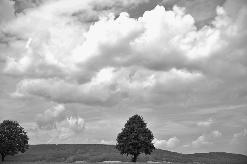 Cloud Cloud - Sky Day Horizon Over Land Landscape Nature Outdoors S/w Sky Tree Trzoska Wolken