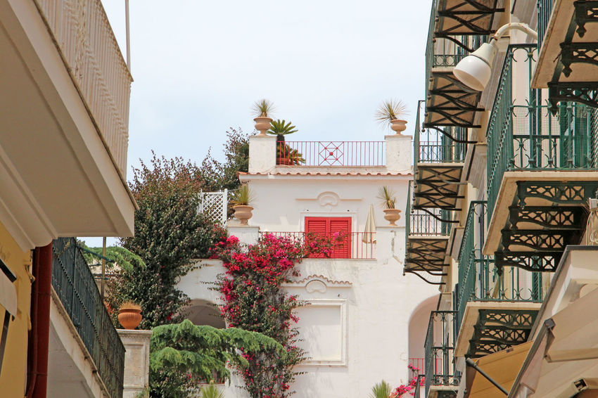 beautiful Capri Architecture Balconies Building Capri Capri, Italy City Flower Flowerpots Flowers Italia Italy Italy❤️ Landscape_Collection Landscape_photography Nature Nature Photography Nature_collection No People Outdoors Plant Residential Building Residential Structure