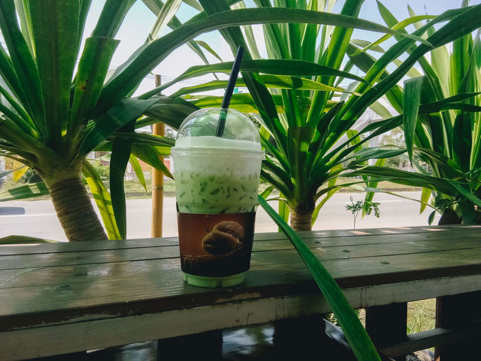 กาแฟในป่า Office Coffee Coffee Time Palm Tree Tree Drink Drinking Glass Close-up Green Color Plant Life Mint Tea Drinking Straw Palm Leaf Ice Cube Blossom Growing Mojito Iced Coffee Moroccan Culture Herbal Tea Smoothie In Bloom Milkshake Beverage Frond Mint Leaf - Culinary Botany Pine Nut Jar