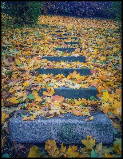 Steps Leaves